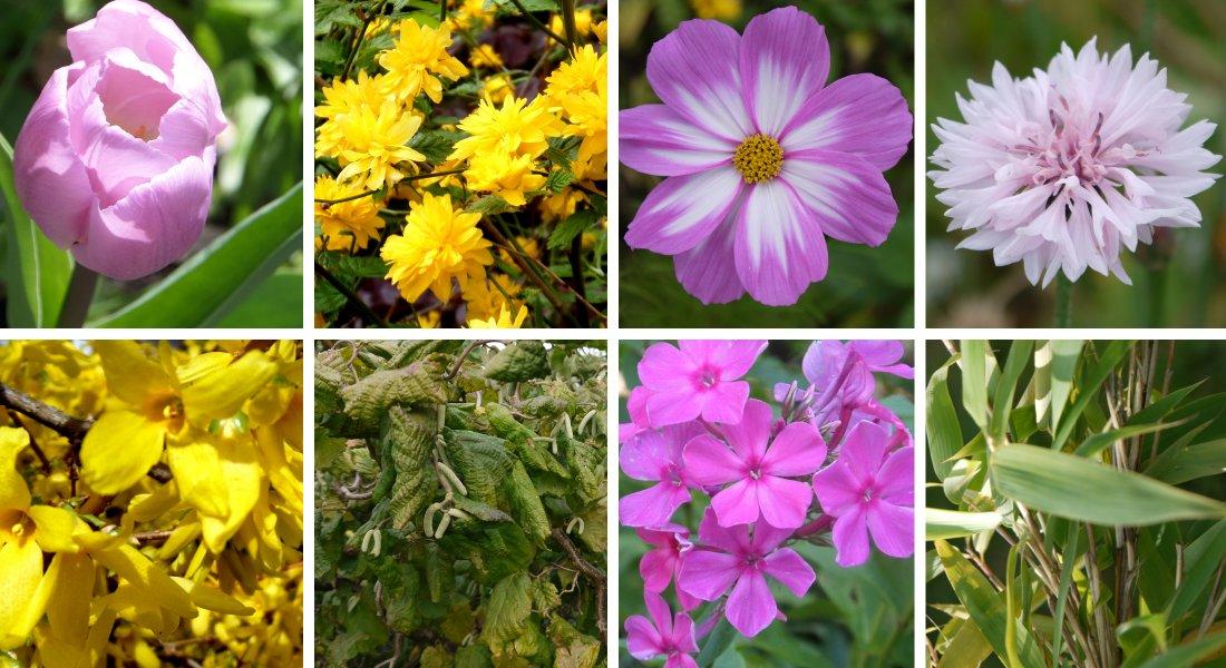 Dekorieren Und Basteln Mit Material Aus Dem Eigenen Garten   Welche Pflanzen  Naturmaterialien Liefern | Altes Gartenwissen.de