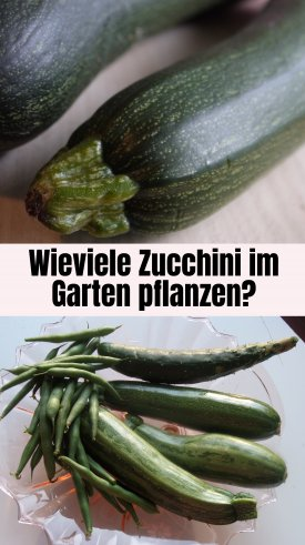 zucchini im eigenen garten oder auf dem balkon anbauen pflegen und ernten altes. Black Bedroom Furniture Sets. Home Design Ideas